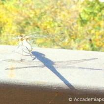 L'apparenza sembra l'essenza. Una libellula ci mostra una diversa via