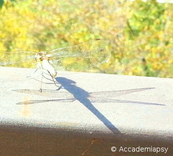 In un'epoca in cui l'apparenza sembra l'essenza una libellula ci dà una lezione